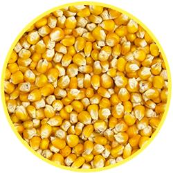 cereale mais