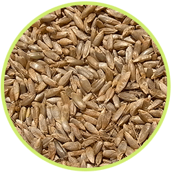 cereale seigle